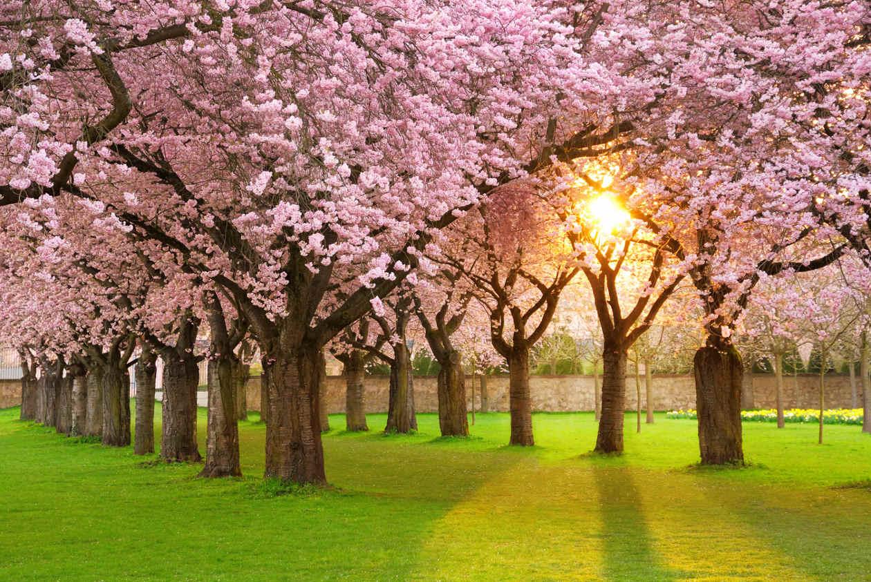 La primavera ordenada 1