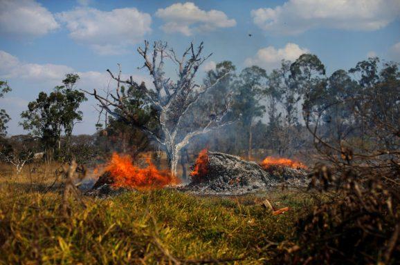 ¿Cómo ayudar ante la tragedia del Amazonas?