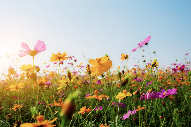 orden de primavera